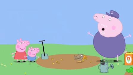 小猪佩奇:佩奇爷爷好难过,刚种的小花朵,种子就被小鸟吃了