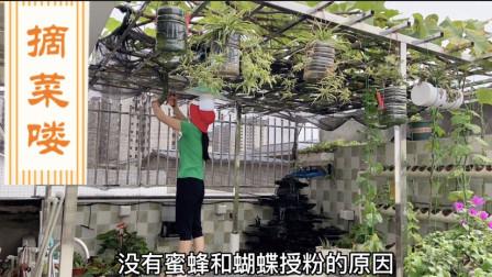 楼顶花园用来种菜 各种蔬菜丰富多样 茄子辣椒挂果时间长吃到想吐