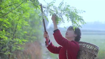 李子柒在山上拿着镰刀采洋槐花,没一会就摘了一筐真是大丰收!