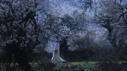 李子柒深山树上采花,一袭白衣在桃树林好似仙女一般,难怪都她这么多粉丝!