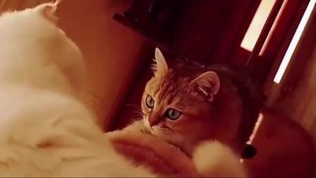 猫咪:我有相信爱情了,是心动的感觉!