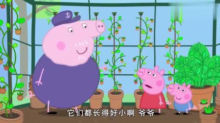 小猪佩奇:狗爷有秘制菜谱,做色拉超熟练,平时肯定没少这样吃!