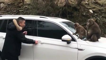 猴子:今天没有两百根香蕉,这事不算完!