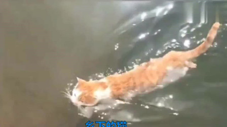 城里的虎斑猫VS乡下的橘猫,我们大概是狗子带大的!