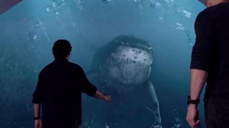 远古凶兽巨齿鲨苏醒,一口能吃掉一头蓝鲸,太凶残了!