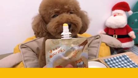 布丁最喜欢它的冰箱了装满好吃的!