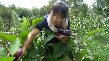 农村菜园茄子吃不完,摘一筐多做几种吃法,鲜香可口吃美了