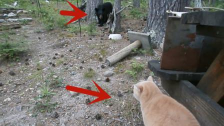 黑熊正在觅食,突然感觉身后凉飕飕的,一回头撒丫子就跑