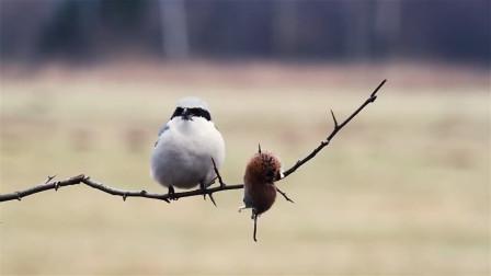 男子收养了一只可爱的小鸟,不料它竟如此凶残,镜头记录全程