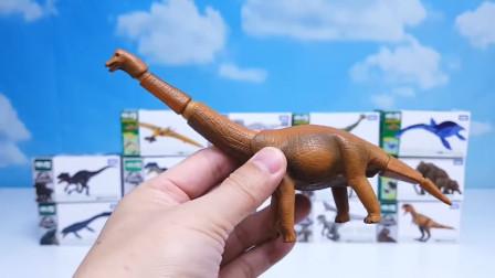 恐龙玩具世界乐园,霸王龙翼龙腕龙甲龙开箱大揭秘,越看越精彩