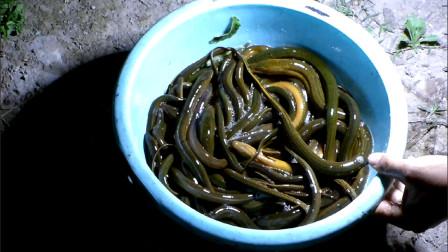 四川达州: 农村虽偏僻,但原生态资源丰富,村哥一晚能抓十多斤野生黄鳝