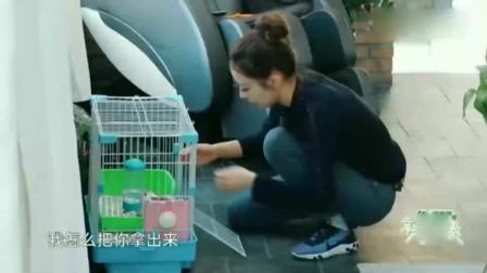 """郎朗用胡萝卜""""引诱""""小兔子,吉娜要铺地毯迎接它?"""