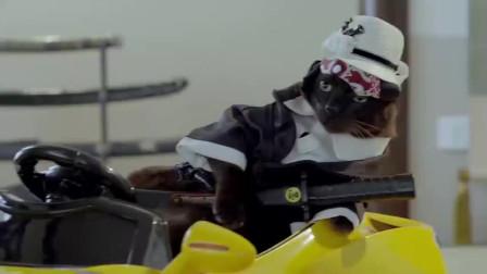 这只黑猫,那气势,那眼神,挺像的