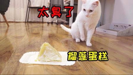女主人给猫咪买了个榴莲蛋糕,小猫狂吃,大猫却吓到躲床底!