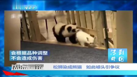 咖啡馆将松狮染成熊猫,这一举动引网友热议:狗狗洗澡会掉色吗?