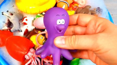 乐享动物乐园带你认识软体章鱼与跃动的海豚
