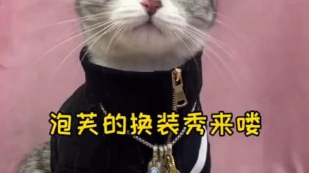 萌宠:泡芙猫咪的变装秀,你最喜欢哪一套造型?