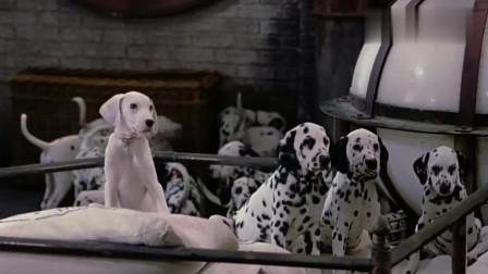 102斑点狗:团结就是力量,一群小狗把狗贩子库伊拉烤成了蛋糕