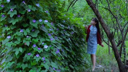 """李子柒古香古食 第二季 第50集 用秋葵""""凑""""了一堆菜,吃饱喝足乐颠颠"""