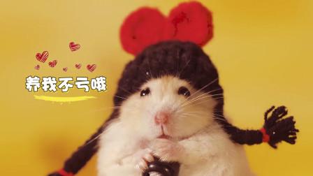 """如果你养了一群仓鼠,你会发现养了一群""""小祖宗"""",太会搞事了"""