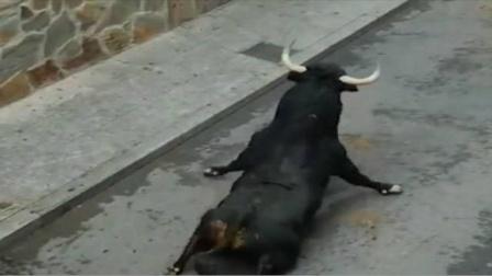公牛直接从车上一跃而下,脊椎骨直接断了,这下公牛悲剧了