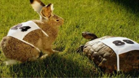 龟兔赛跑,用事实证明,兔子当年输得真不冤!记录精彩画面!