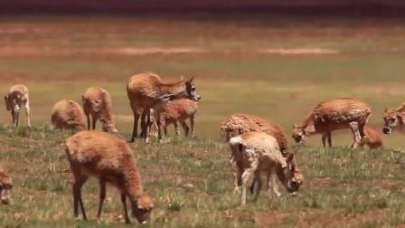 """地球上""""体力最强""""的动物,每次""""繁殖""""时间高达8小时"""