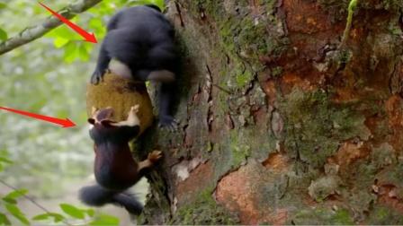 """猕猴爬上了树,抢了松鼠食物还打人,一巴掌扇得""""啪啪响""""!"""