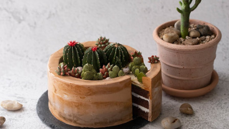 你以为这是一个多肉植物,其实一刀切下去,是个巧克力蛋糕!