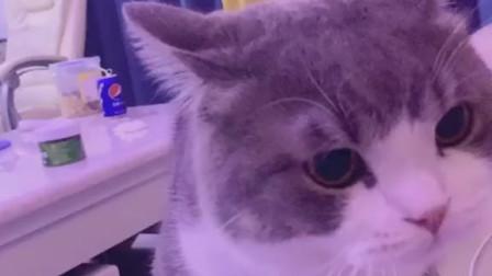 萌宠:偷吃了土豆猫咪一颗布丁而已,为啥他要这么对我?