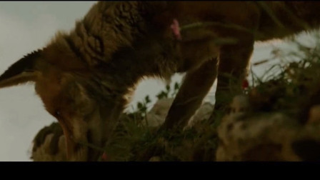 狐狸与我:小女孩跟狐狸赛跑,这玩得真开心啊