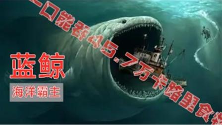 世界上最大的动物,一口能吞45.7万卡路里食物,真正的海洋霸主!