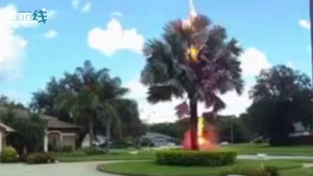 现实版晴天霹雳!美国晴天突降雷电 一声巨响火花四溅劈开棕榈树