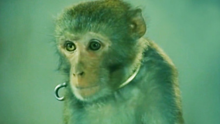 小树林发生凶案,嫌疑人接连被害,最后猴子成为破案关键