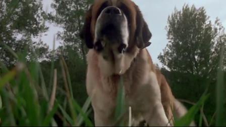 狂犬惊魂:狗狗追逐猎物,谁知闯进了蝙蝠窝,这下想逃都没用了