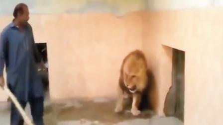 大叔手提木棍,打狮子就跟打儿子似的,确定要这么嚣张?