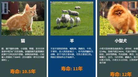 动物寿命排行榜,原来真存在永生生物,而人类寿命却男女有别