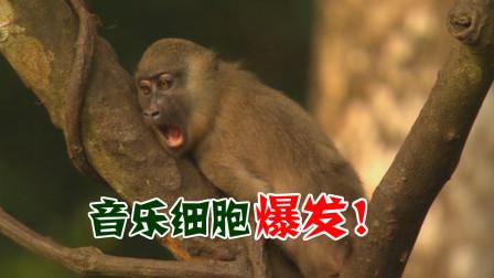 四川话爆笑配音:哎呀遭!音乐细胞控制不住了