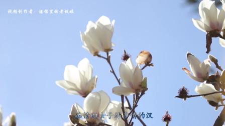 北京小曲:《探清水河》一段凄美的爱情故事