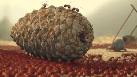 红蚂蚁与黑蚂蚁之间的战争,武器十分先进啊!