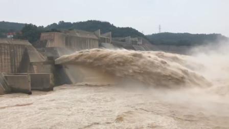 现场震撼!黄河5号洪水来袭,直击小浪底、三门峡水库开闸泄洪