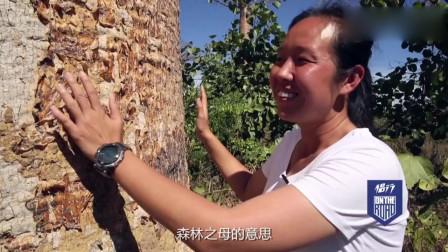 侣行:270夫妇去往非洲马达加斯加,见识神奇的猴面包树,果肉味道和面包很像