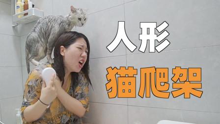 女主人第一次给猫洗澡,直接被当成人型猫爬架,大腿被抓的全是伤