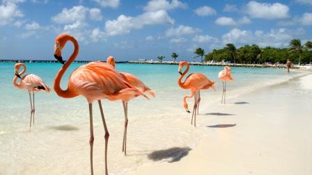度假天堂的小岛,完美旅游胜地,还可以和火烈鸟互动!
