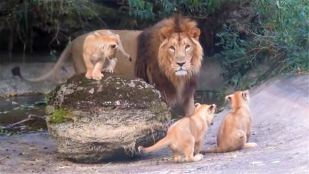 母狮不在家,狮爸带孩子,做梦也没想到会被欺负成这样