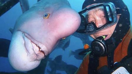 鱼的记忆只有7秒?老人和鱼做朋友28年,太不可思议了