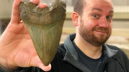 老外万元网购150万年前石头,切开不淡定了,憋住可别笑!