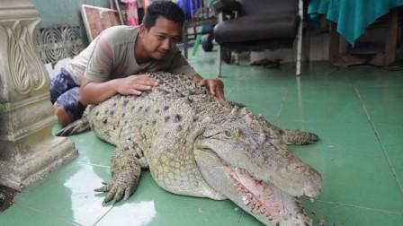 男子2块钱买了条鳄鱼,20年后,竟长成这副模样