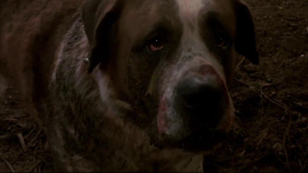 狂犬惊魂:狗狗被蝙蝠咬伤,发生变异,当场把大叔咬