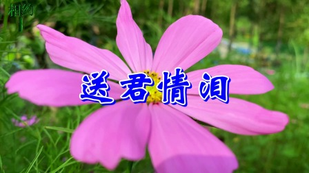 林翠萍一首情歌《送君情泪》,句句走心,声声不舍,深情感人,听哭了!